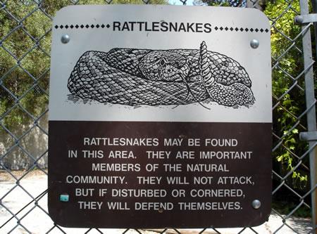 California Rattlesnakes